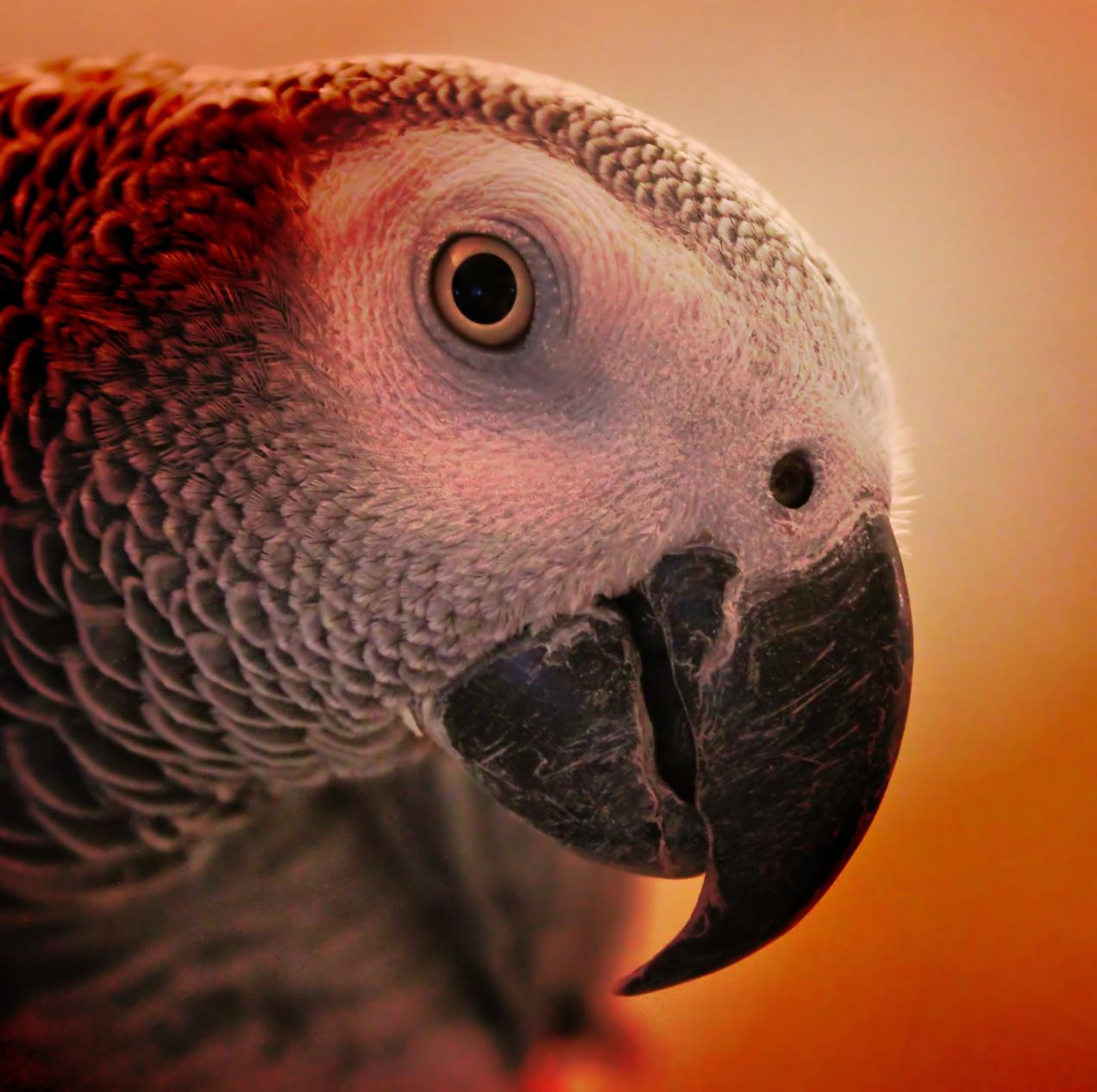 Yoshi Bird
